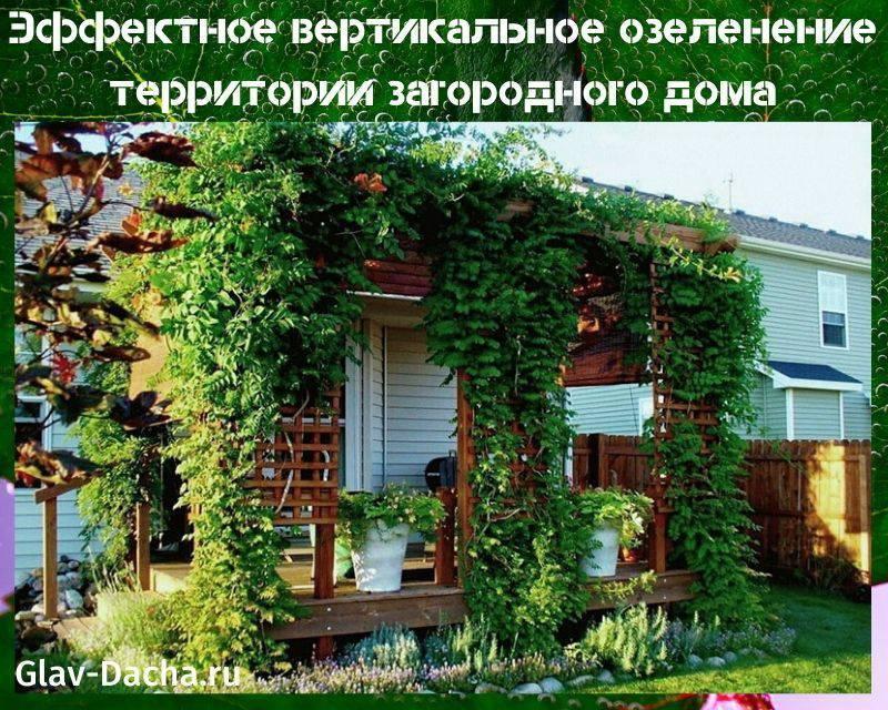Вертикальное озеленение - виды, системы, выбор конструкций
