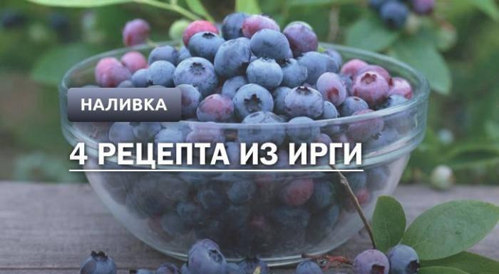 Полезные свойства ягод ирги и противопоказания, о которых необходимо помнить