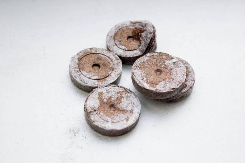 Как пользоваться торфяными таблетками для рассады