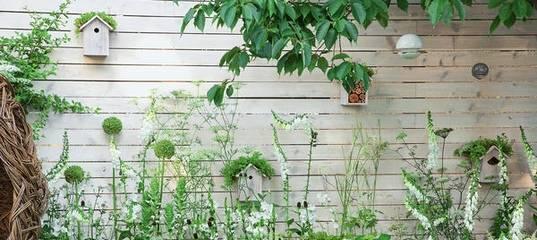 Как следует выращивать канны в собственном саду?