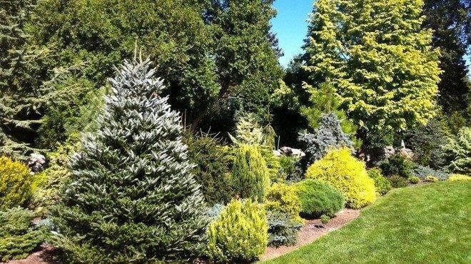 Хвоя сосны и ели — хорошее удобрение для растений и отличный пестицид