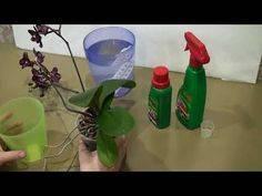 Без какого удобрения для орхидей не обойтись при их выращивании? виды подкормок и правила внесения