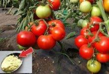 Стимуляторы роста растений: циркон, атлет, корневин, гиббереллины и другие