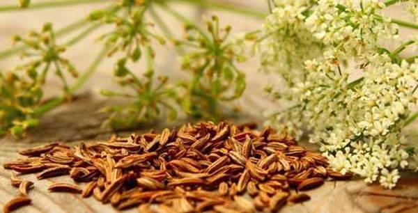 Можно ли вырастить бадьян из семян в домашних условиях и как за ним правильно ухаживать