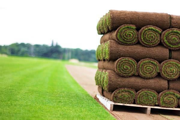 Укладываем рулонный газон