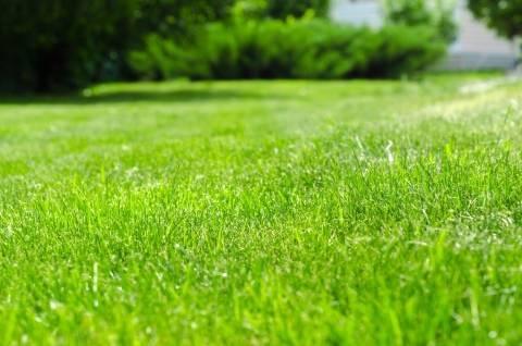 Газон для ленивых: посев и уход