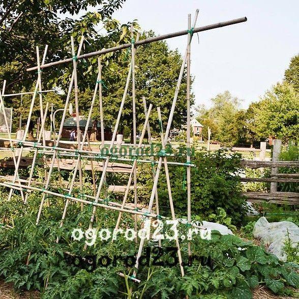 Шпалера для винограда — пошаговая инструкция, как сделать своими руками. обзор популярных конструкций + 90 фото