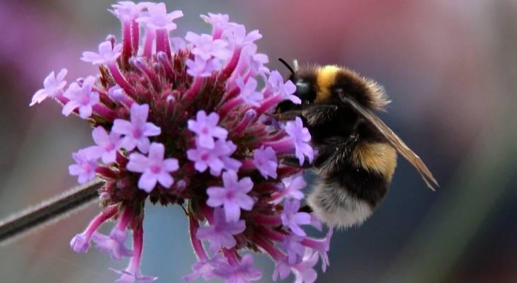 Незваные гости: что делать при появлении пчёл на даче или дома