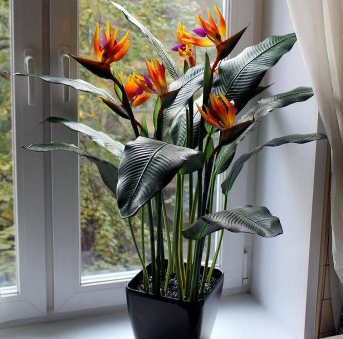 Основы нехитрого ухода за идеальным растением для озеленения дома – асплениумом