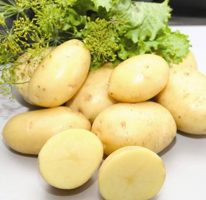 Ранние и ультраранние сорта картофеля (описание с фото)
