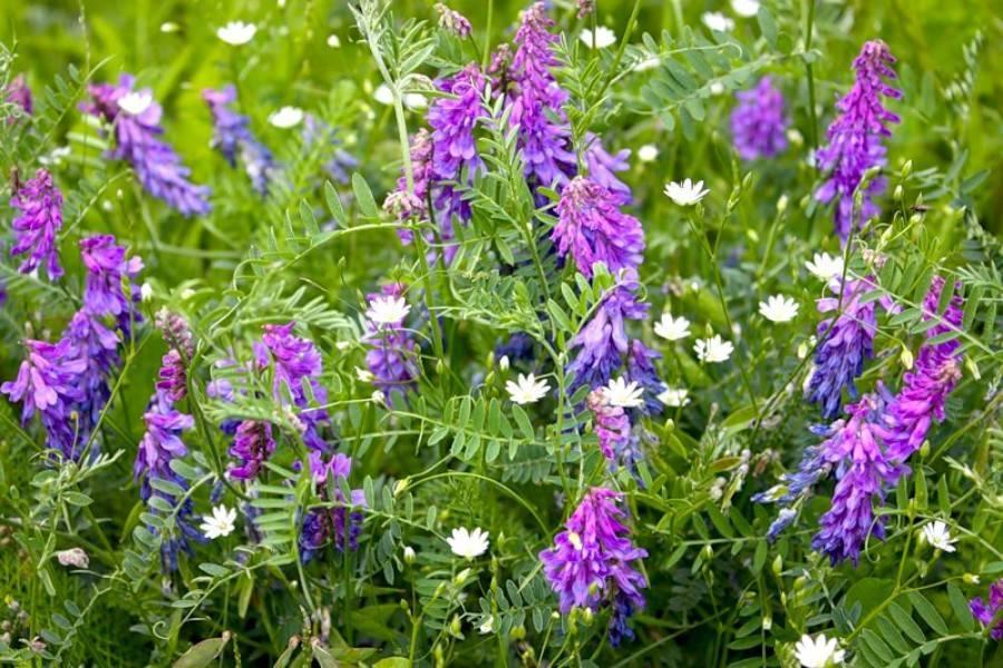 Пряные травы для вашего сада