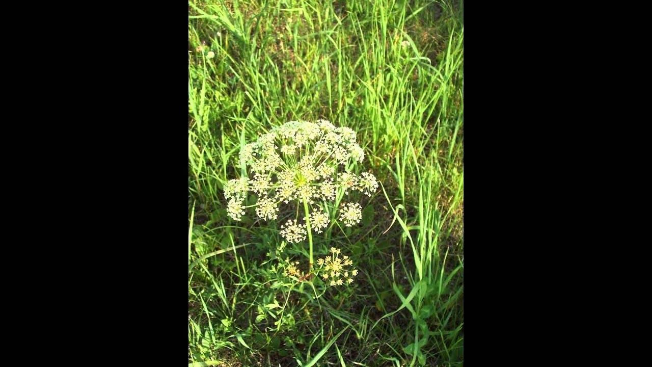 Прополка, применение гербицидов и мульчирование – современные способы борьбы с сорняками на огороде