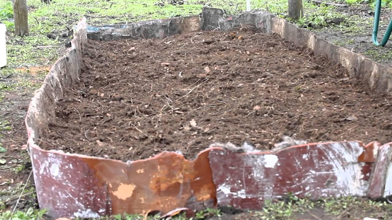 Всё, что нужно знать про выращивание клюквы: виды, сорта, посадка и уход, сбор и хранение