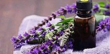 Иссоп лекарственный — лучшие народные рецепты с растением