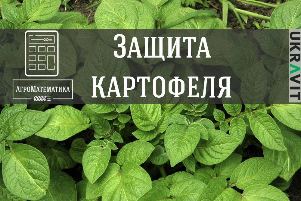 Удобрение для рассады – стимул ее развития, правильный мир