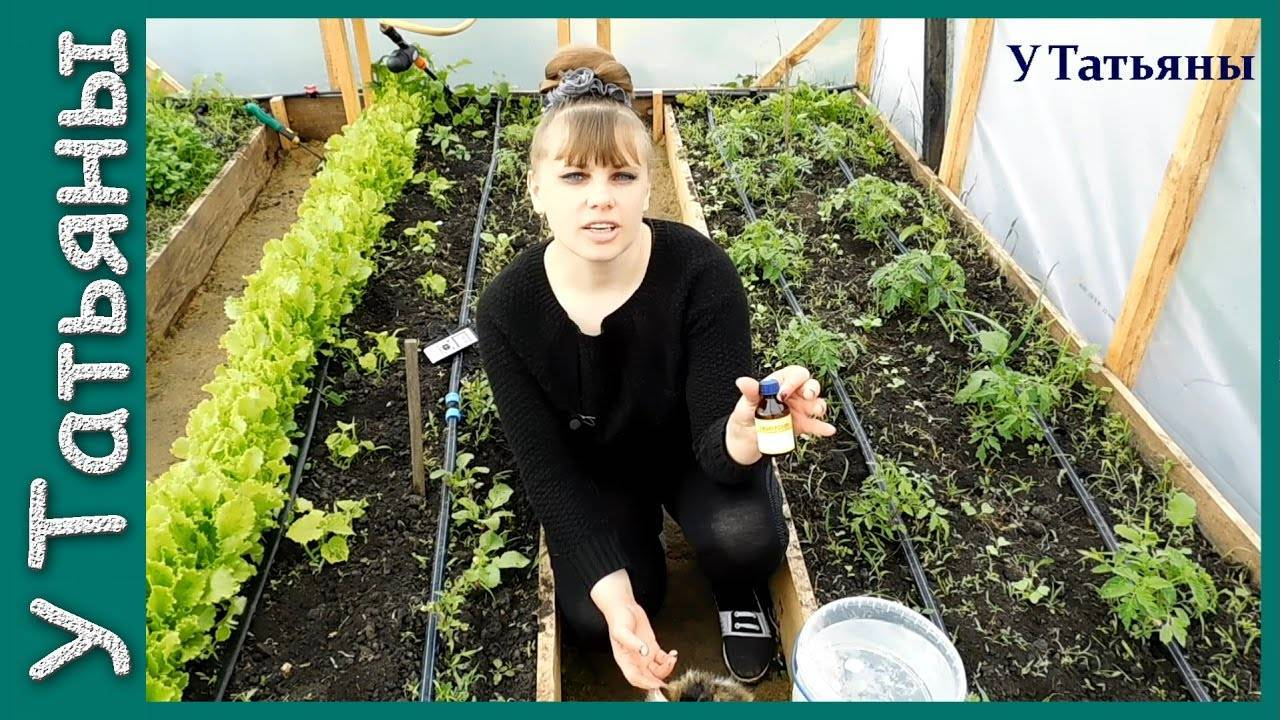 Эффективное применение нашатырного спирта в садоводстве