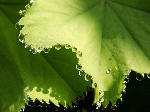 Роль транспирации воды в жизни растений