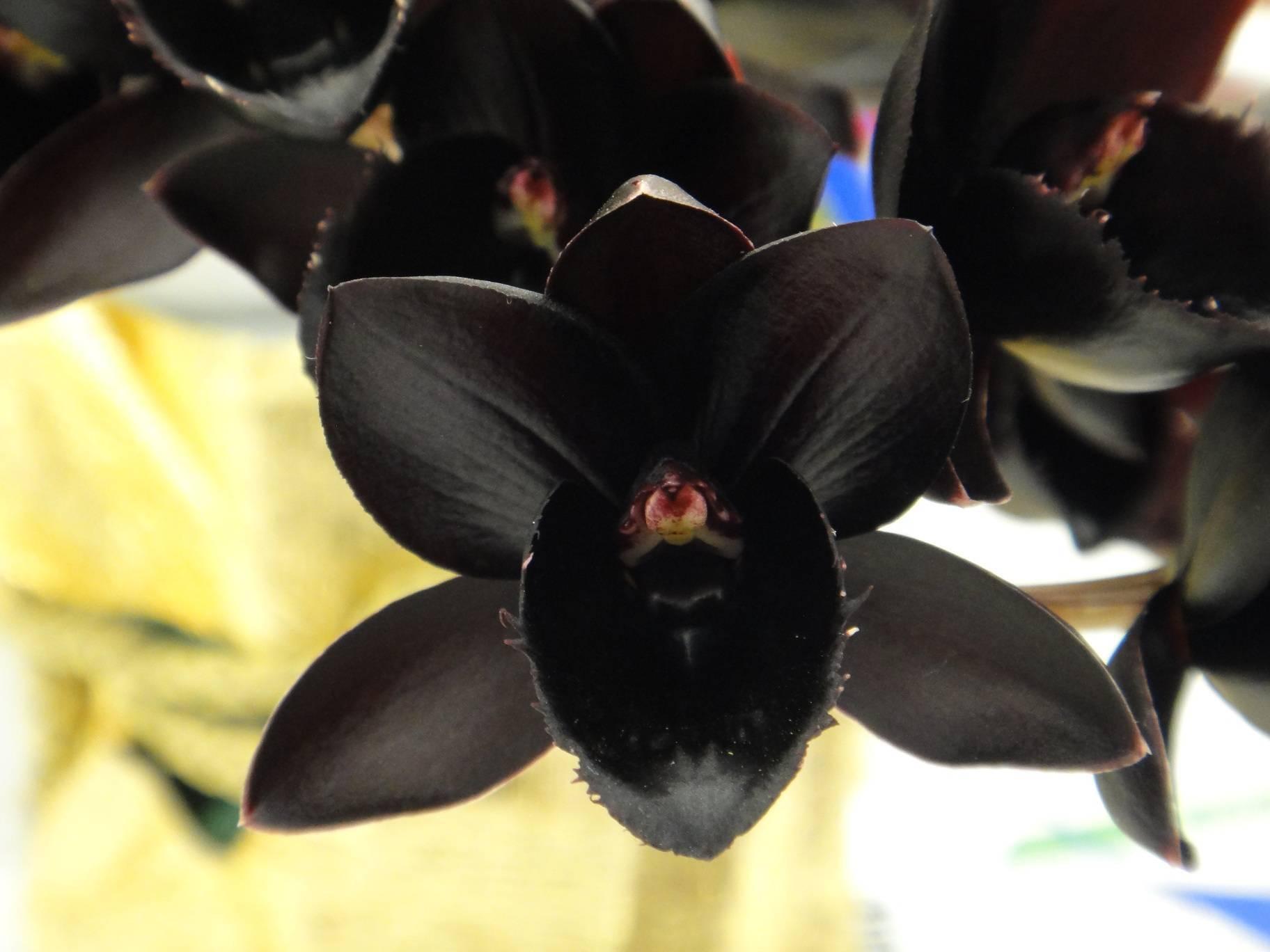 Спасаем фаленопсис от болезней и вредителей: тонкости ухода за орхидеей в домашних условиях