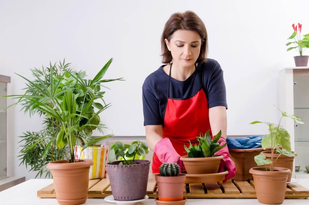 Яичная скорлупа как удобрение для комнатных растений (много фото)