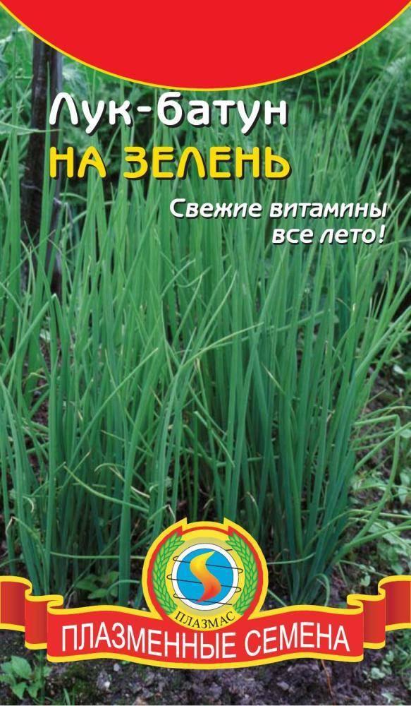 Выращивание лука в огороде: правила посадки, ухода, сбора и хранения урожая