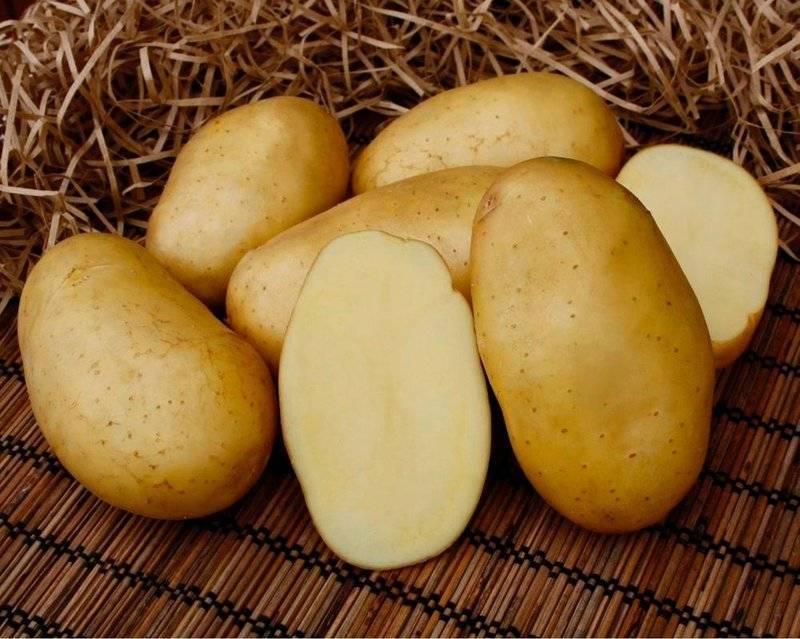 Вредители картофеля: описание с фото и методы борьбы с ними