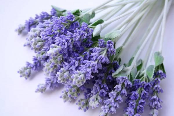10 съедобных цветов – пробуем красоту на вкус