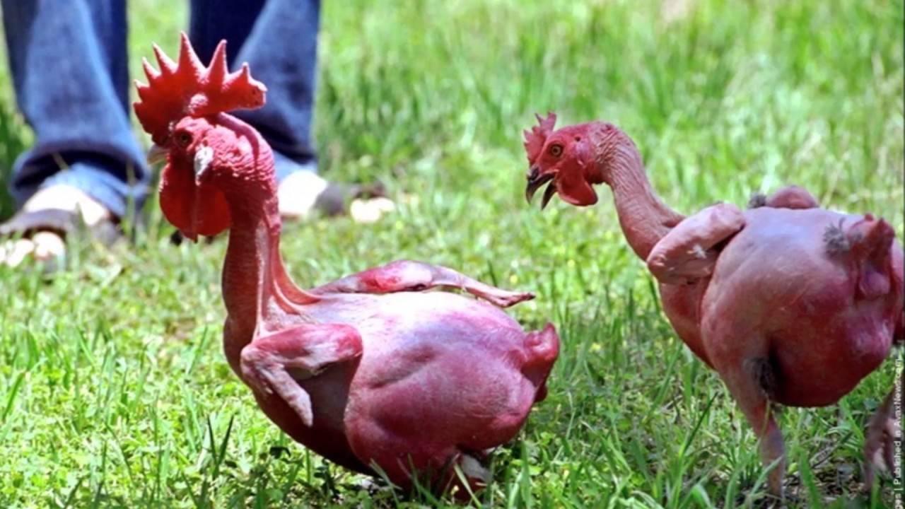 Как происходит вылупление птенцов? все, что нужно знать об особенностях процесса, чтобы не беспокоиться
