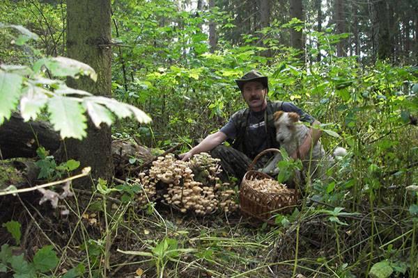 Как правильно собирать грибы в лесу, основные правила
