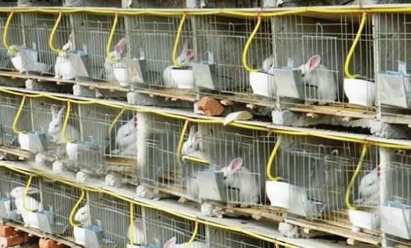 Как сделать поилку для кроликов в домашних условиях?