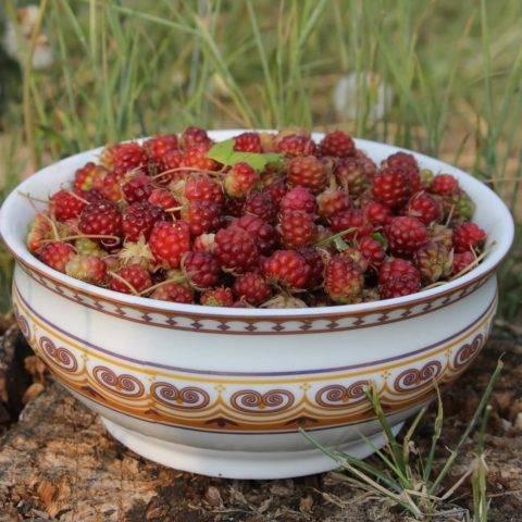 Княженика и костяника: это одно и тоже или нет, фото, чем отличаются ягоды
