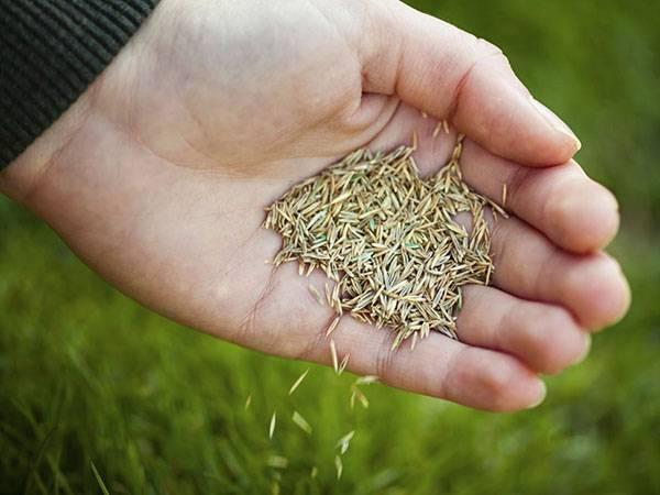 Сеялка для газона — ручная и механизированная модель, видео