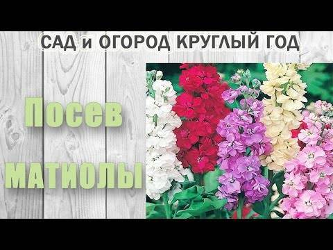 Делаем клумбу из однолетников: какие цветы лучше использовать + секреты оформителей