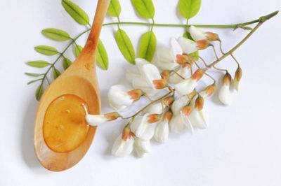 Бакопа мадагаскарская — особенности выращивания, обрезка, видео