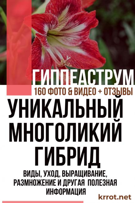 Гиппеаструм: посадка, уход и выращивание