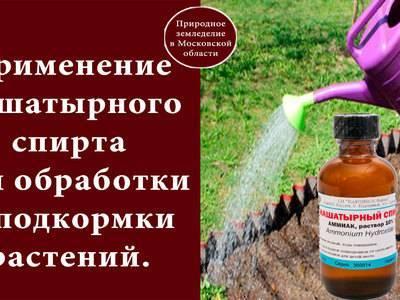 Нашатырный спирт для огурцов: старое народное средство для богатого урожая!