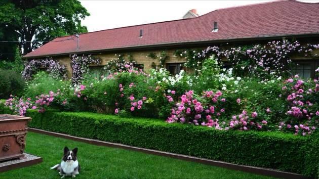 Живая изгородь: подбираем кустарники