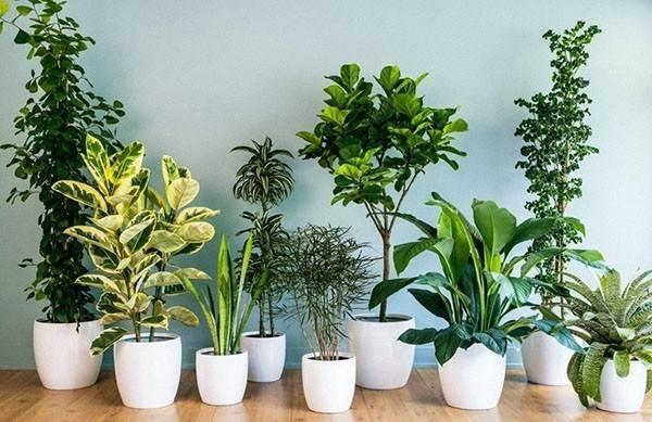 """Препарат для здоровья корневой системы """"этамон"""": важный элемент ухода за растениями"""