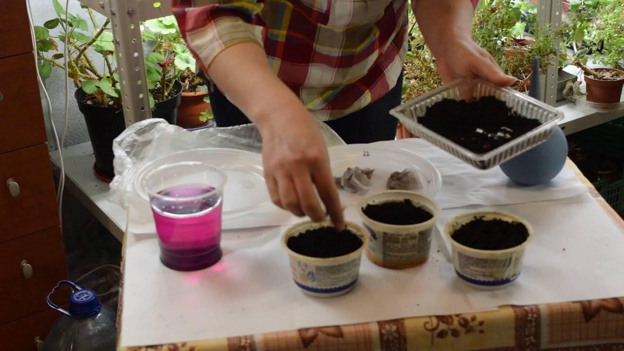 Когда сеять перец на рассаду: вот как вырастить здоровую рассаду перца в квартире.