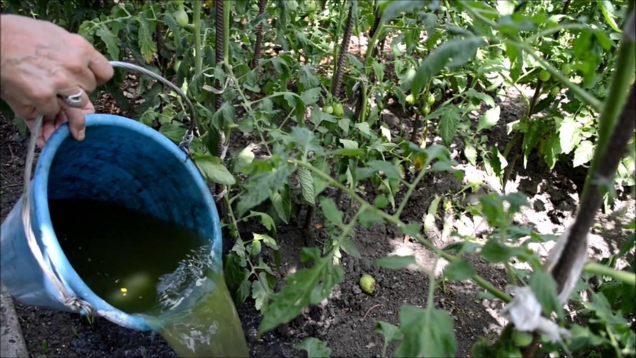 Как сделать удобрение из крапивы: 8 простых рецептов