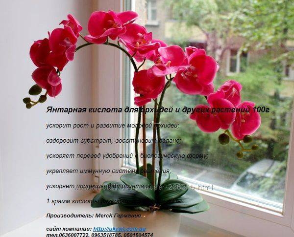 Подкормка орхидей «янтарной кислотой» — в чём польза, как использовать, результаты применения