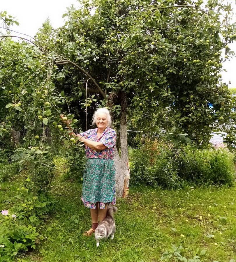 Обработка сада железным купоросом осенью и весной — как разводить пропорции и применять