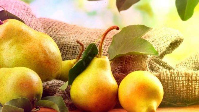 Сорт груши «память жегалова» — особенности ухода