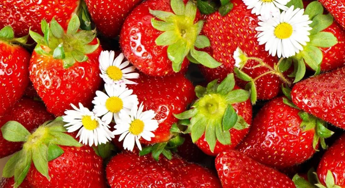 Выращивание клубники в теплице – все подробности процесса от опытных садоводов