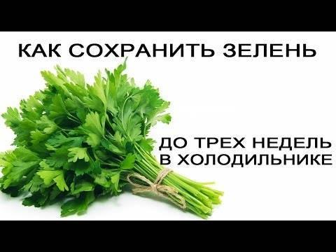 Как хранить листья салата в холодильнике свежими долго?