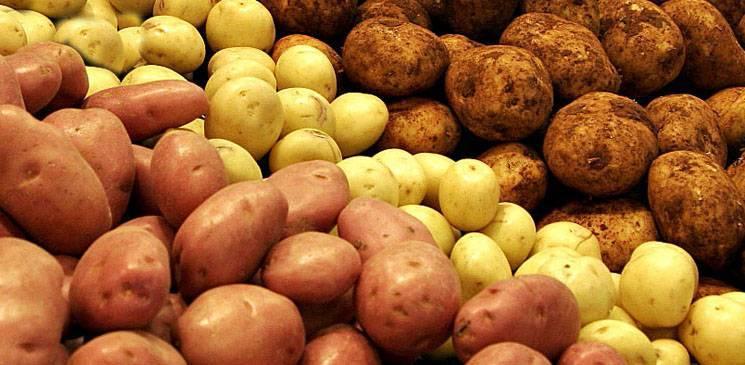 Чем и как удобрять картофель весной и осенью: правила подготовки картофельной грядки