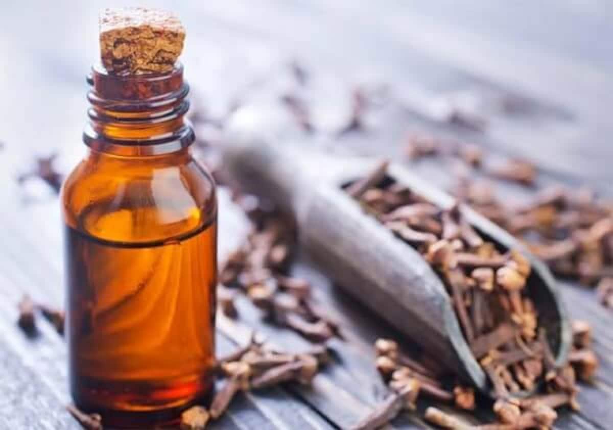 Пряность гвоздика: полезные, лечебные свойства и противопоказания