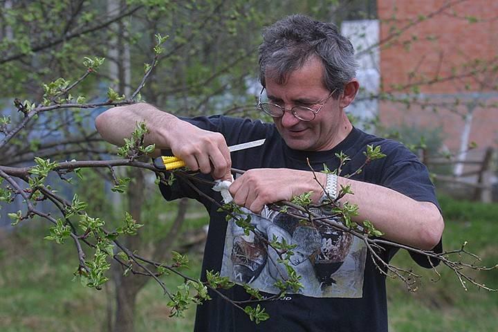 Что делать в апреле садоводу, огороднику  и цветоводу – план основных работ