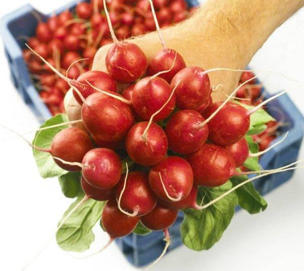Технология выращивания редиса в ячейках из-под яиц дома и на даче. правила посадки овоща и ухода за ним