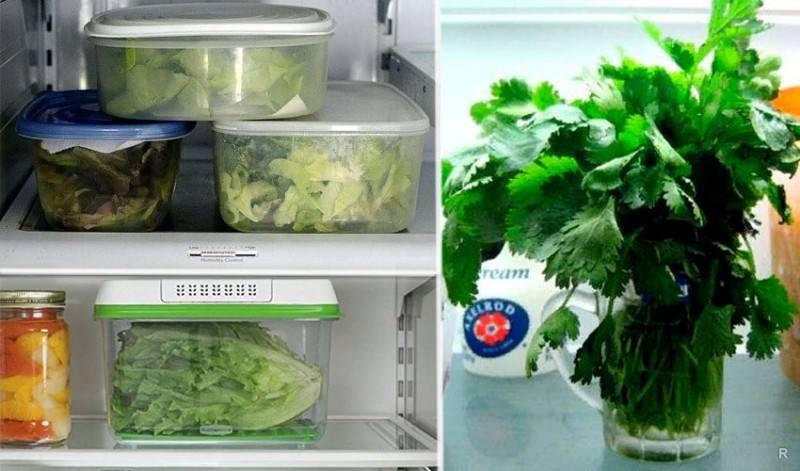 Условия, срок и температура хранения свежей зелени в домашних условиях
