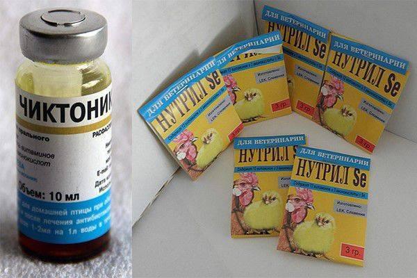 Байкокс и другие препараты для лечения цыплят